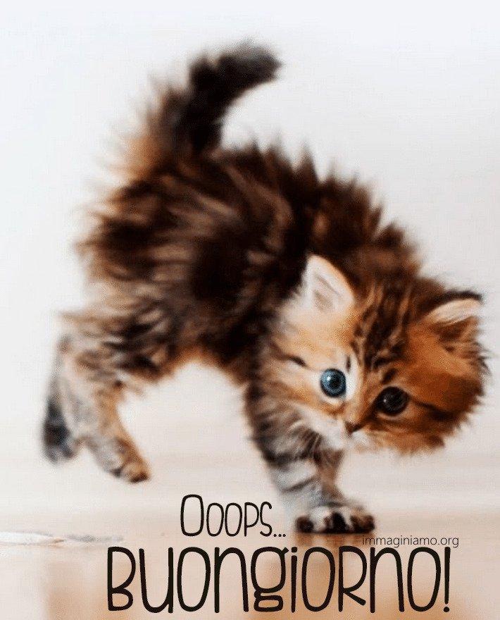 Immagini buongiorno ocn animali divertenti