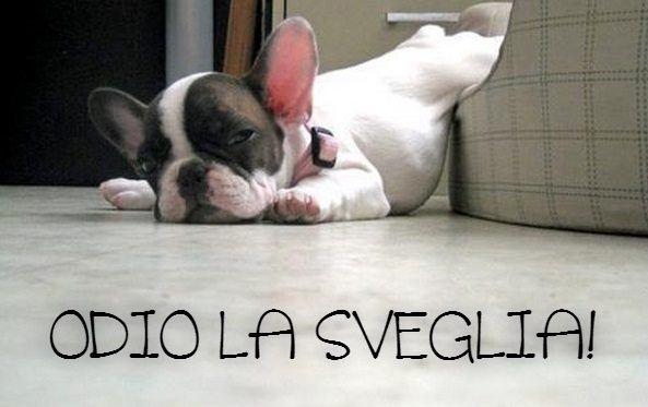 Odio la sveglia for Immagini buongiorno divertentissime