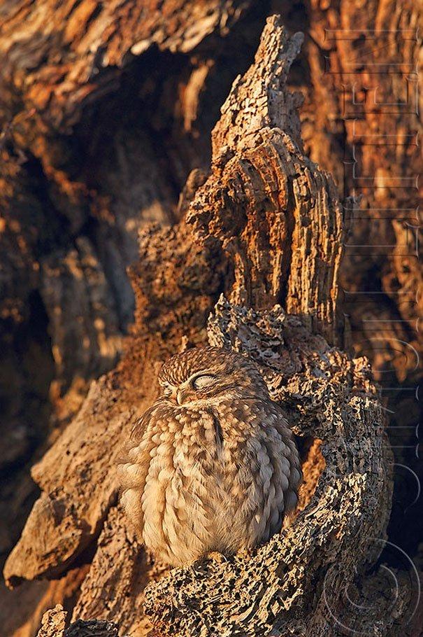 animali mimetici - mimetizzati nel bosco