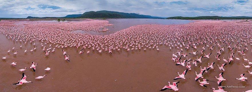 Lago dei fenicotteri (Lake Bogoria) - Kenya