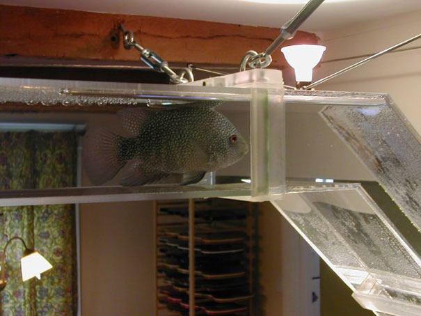 acquario da tunnel in casa