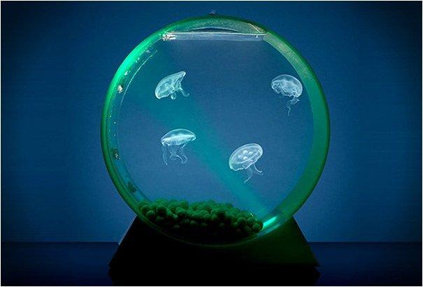 acquari illuminati