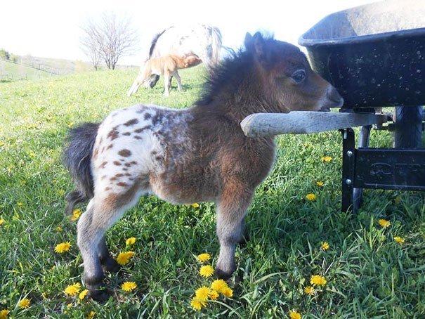 Adorabili MINI Cavalli (15 Immagini)