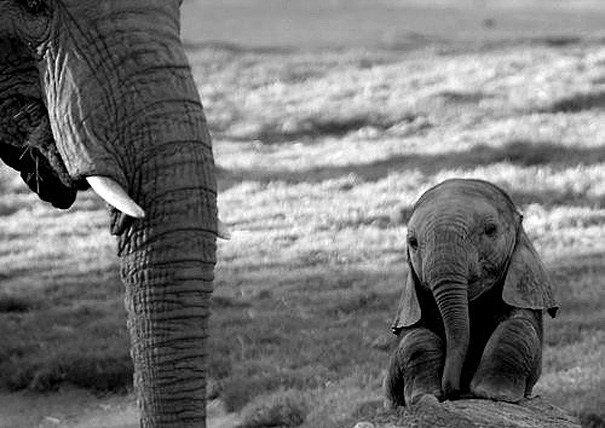 animali piccoli