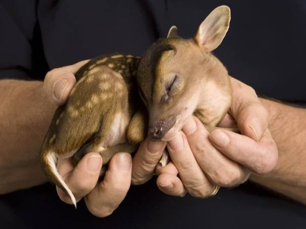 animali appena nati