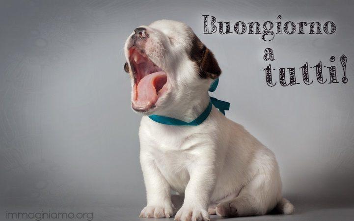 cane divertente che sbadiglia - buongiorno frasi e immagini