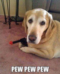 cane divertente