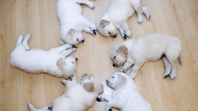 animali-divertenti-che-dormono