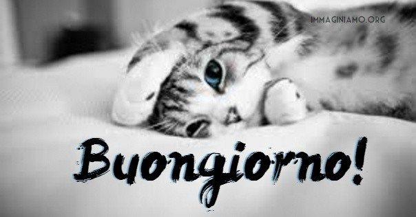 frasi buongiorno gatti