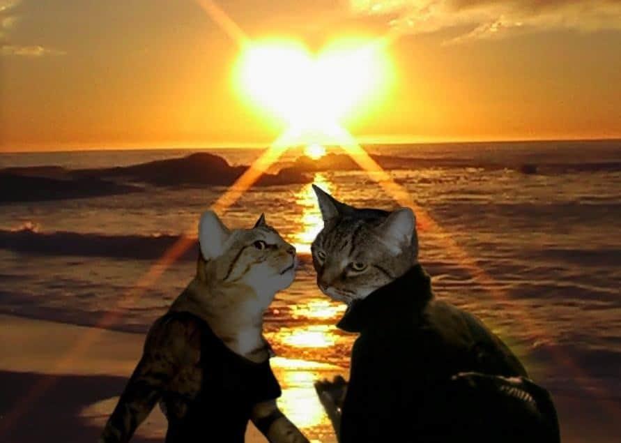 Gatti divertenti al tramonto