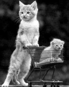 Immagini divertenti gatti
