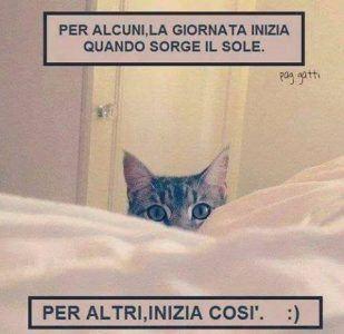 gatti-divertenti