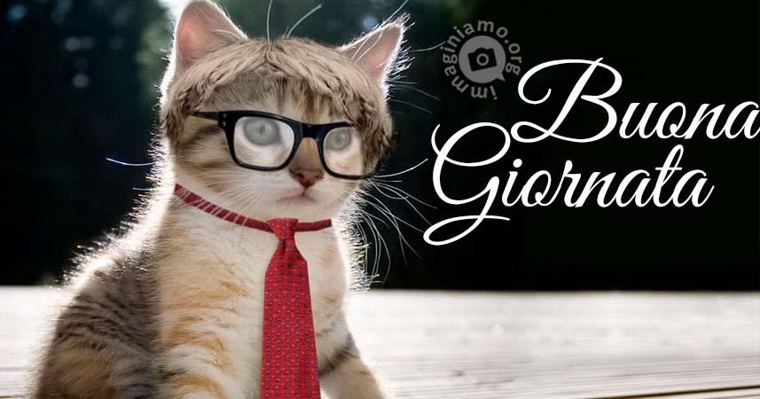buongiorno-divertenti-con-gatti