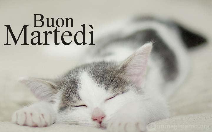 Buon martedì gattino