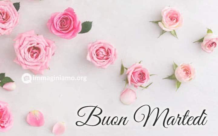 Buon martedì rose