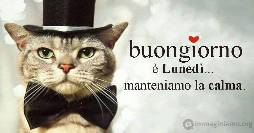 Buon Lunedi Immagini E Frasi Immaginiamo Org