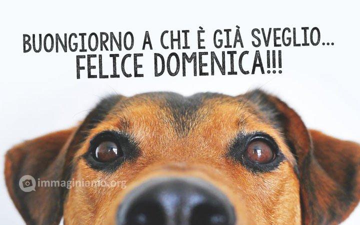 Buona domenica cani divertenti frasi