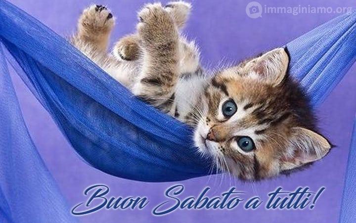 Immagini gatti buon sabato a tutti