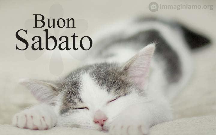 sabato gatti