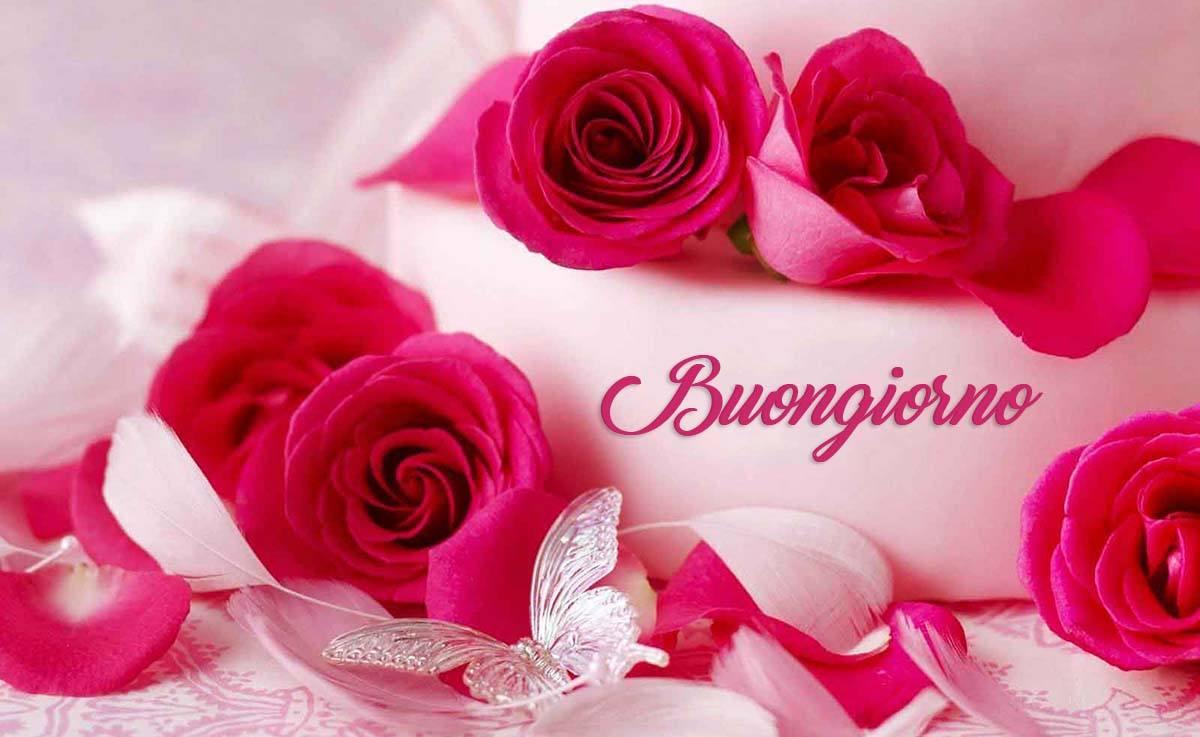 Romantiche-rose-buongiorno