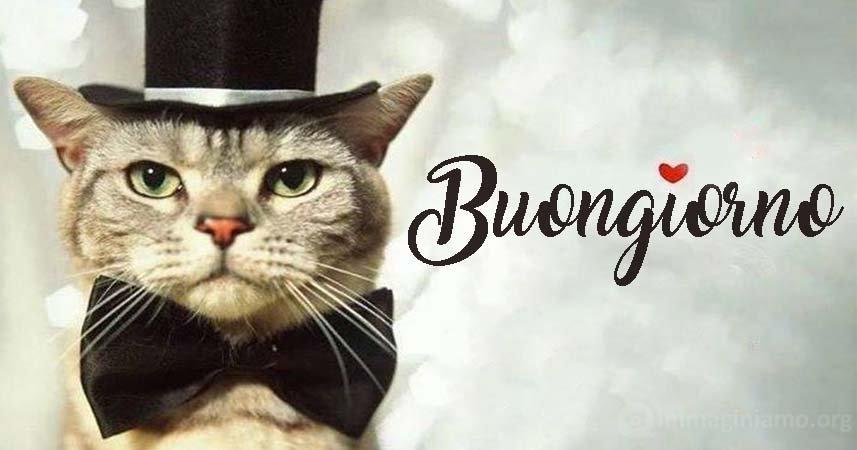 Immagini buongiorno buffe e divertenti con gatti