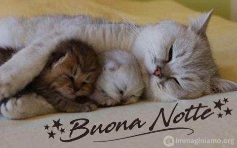 immagini gatti dolci buonanotte gatti