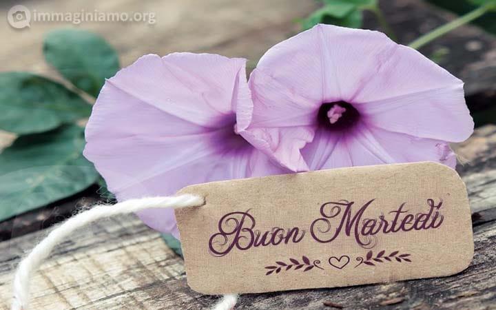 Immagini con fiori per un augurare un buon martedì