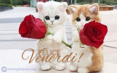 Augurare un felice venerdì con gattini e rose rosse