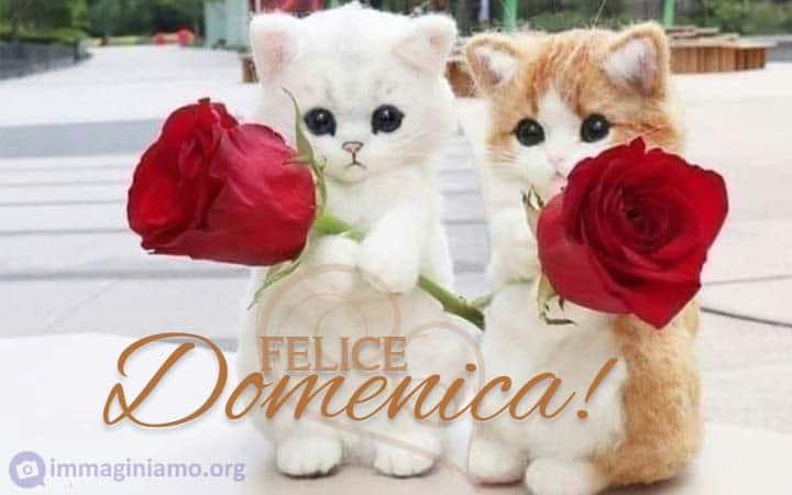 Immagini per augurare una felice domenica con gatti e rose rosse