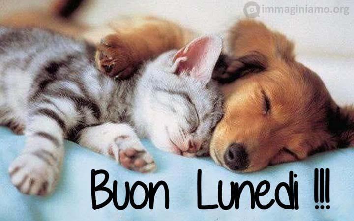 Immagini dolci buon lunedì con animali cuccioli
